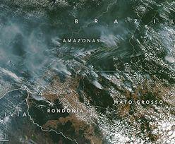#UgaśmyPłucaŚwiata. Pożary w Amazonii to nie przypadek, tylko dzieło człowieka. Głównie jednego