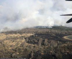 Pożar lasu w Czarnobylu. Zatrzymany wyjawił, dlaczego dokonał podpalenia