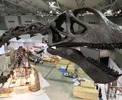 Argentyńczycy znaleźli najstarszego gigantycznego dinozaura