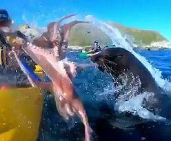 Foka spoliczkowała kajakarza macką wielkiej ośmiornicy. Nagranie jedno na milion