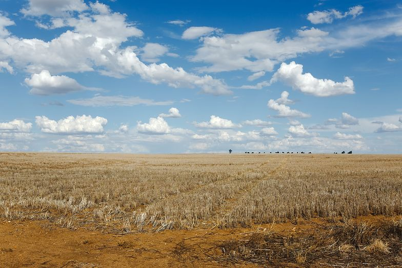 Od kilku lat obserwujemy zmiany w klimacie, które wiążą się z koniecznością likwidacji skutków dokuczliwych upałów i suszy - alarmuje NIK