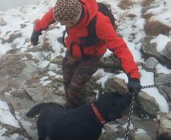 Przerażony labrador na szczycie Giewontu. Turyści podjęli niezwykłą akcję ratunkową