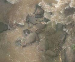 Tragedia zwierząt. Słonie zginęły, gdy przybiegły na pomoc