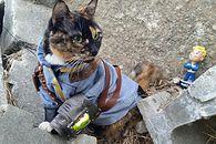 Co wspólnego mają koty z radiem w Fallout 4?