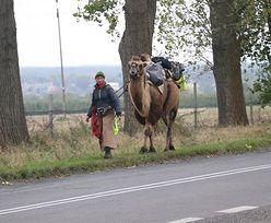 Wykupiła wielbłąda z cyrku. Idzie z nim przez Polskę do Mongolii