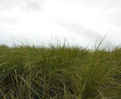 Makabryczne znalezisko w Rzykach. Fragmenty ciała na łące