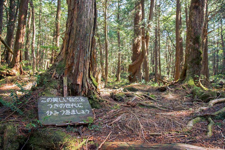 Rosnący u podnóża góry Fudżi Las Aokigahara, znany jest pod różnymi nazwami. Jedni określają go mianem Morza Drzew, inni Lasem Wisielców
