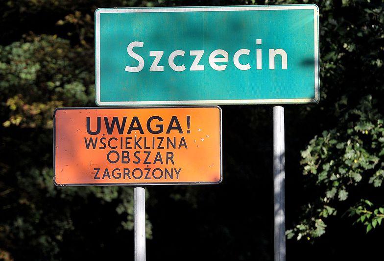 """Wścieklizna w Szczecinie. 1/4 miasta """"obszarem zagrożonym"""""""