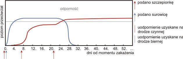 Wykres dotyczący leczenia wścieklizny
