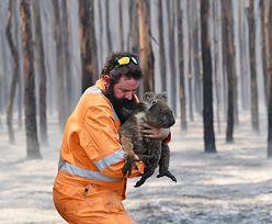 Pożary w Australii. Polscy strażacy pojadą z pomocą? Straż pożarna dementuje informacje