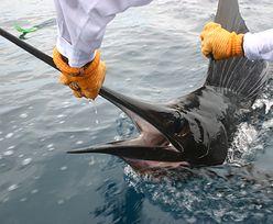 Bracia pojechali na ryby. Zaatakował ich ogromny marlin