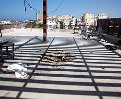 Trypolis. Wielka ucieczka z więzienia. Strażnicy nie powstrzymali osadzonych