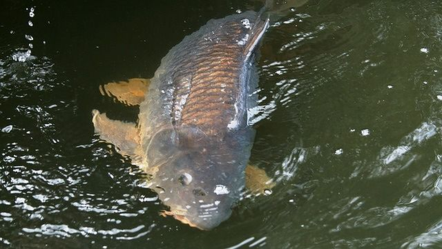 Dzikie ryby
