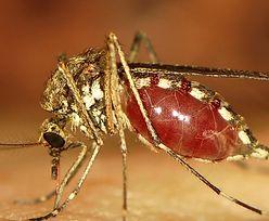 """Polski naukowiec opracowuje """"syntetyczne komary"""". To sposób na choroby"""