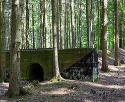 Tajemnicze pozostałości po nazistach. Las skrywa zapomniane budowle