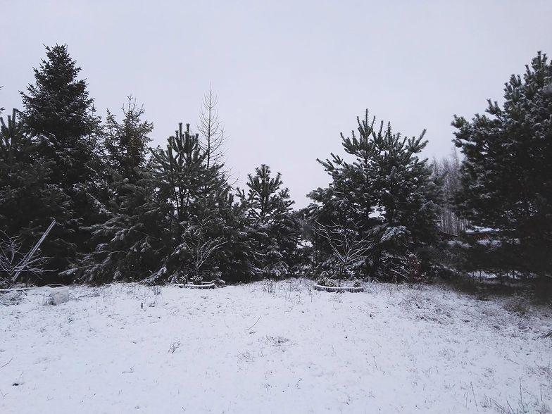 O takim widoku za oknem wielu z nas marzy tej zimy. Nasza czytelniczka miała szczęście.