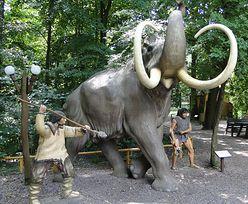 Kraków. Ludzie polowali na mamuty. Archeolodzy znaleźli dowód
