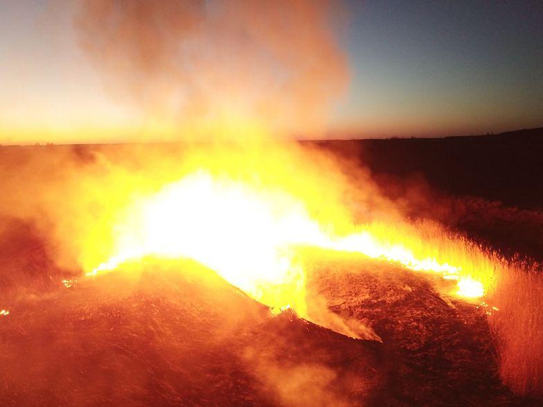 Pożar lasu w Czarnobylu wybuchł w sobotę.