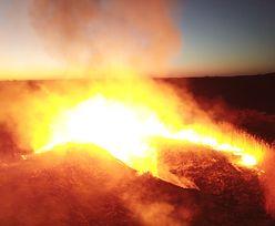 Pożar lasu w Czarnobylu. Władze przekazały złe wieści