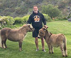 Arnold Schwarzenegger pomaga ofiarom koronawirusa. Aktor znowu zaskakuje