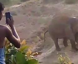 Słonica okrutnie ukarała prześladowców. Rzucali w nią kamieniami