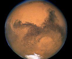 Mars. Skamieniałe owady i gady na zdjęciach? Naukowiec ma teorię