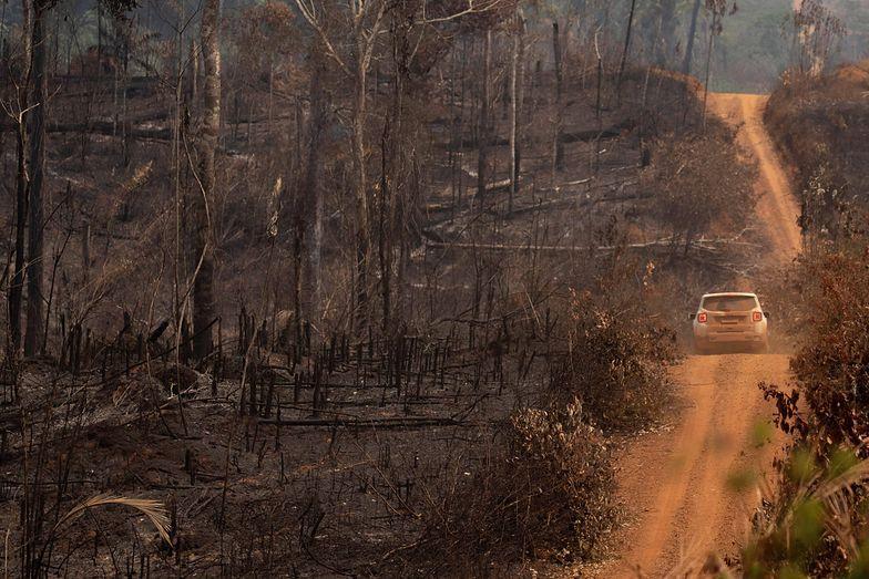 Amazonia i Afryka Środkowa w ogniu. Na zdj. widok strefy leśnej Amazonii zniszczonej przez pożary w stanie Rondonia, Brazylia (25.08.19 r.)