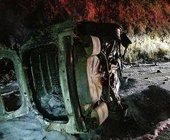 Niedźwiedź skoczył na radiowóz. Policjant ledwo uszedł z życiem