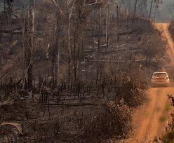 Płonie nie tylko Amazonia. Afryka Środkowa w ogniu