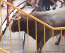 Byk wskoczył na trybuny w Katalonii. Wielu rannych
