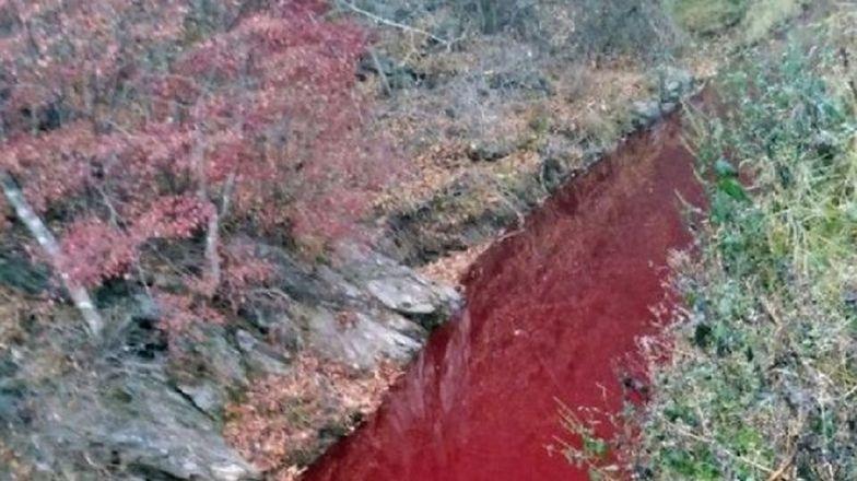 Rzeka krwi w Korei Południowej. Ogromna rzeź świń