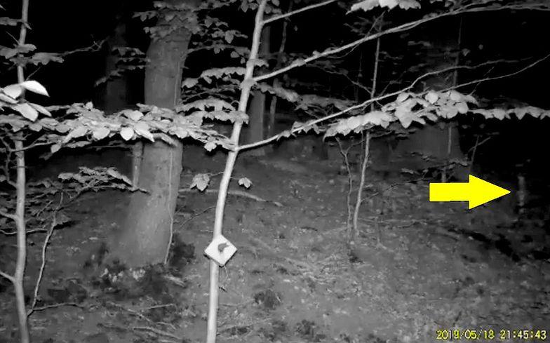 Dziwne nagranie z Gór Sowich.