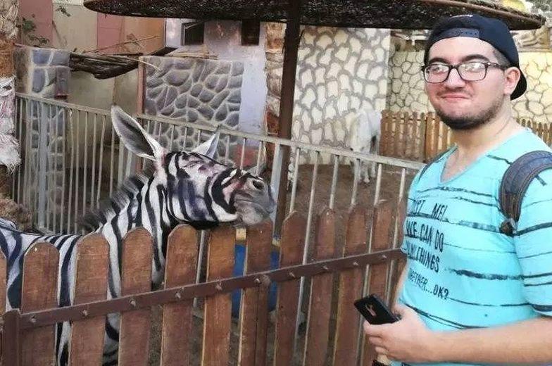 Podrabiane zebry w egipskim zoo. Domalowali paski osłom