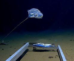 Odkryli przedziwne stworzenie w najgłębszym miejscu Oceanu Indyjskiego