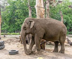 Znany fotograf nagłaśnia sprawę. Słonie krzyczały z bólu