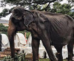 """Apel aktywistów: """"Pomóżcie słoniom na Sri Lance!"""""""