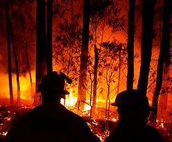 Australia. Gigantyczny ognisty podmuch. Trwoga po połączeniu pożarów