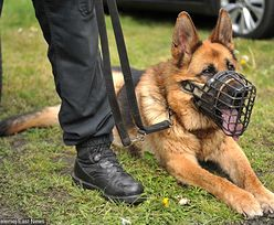 """""""Brutus na emeryturze"""". Policjanci podziękowali owczarkowi za 10 lat służby"""