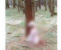 Ktoś powiesił psa na drzewie. Zwierzę konało w męczarniach