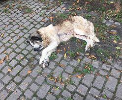 Proboszcz oskarżony o znęcanie się na psem. Zwierzę znaleziono przed kościołem