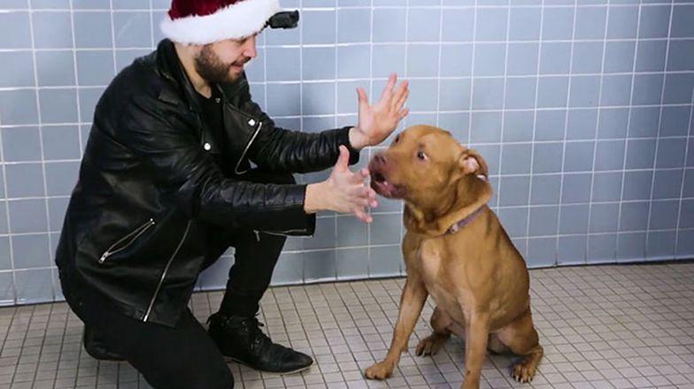 FIlm prawdziwym hitem. Magik robi sztuczki przed psami. Zobacz reakcję