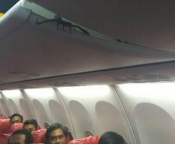 Pasażerowie samolotu przeżyli horror. Na pokładzie niechciany gość