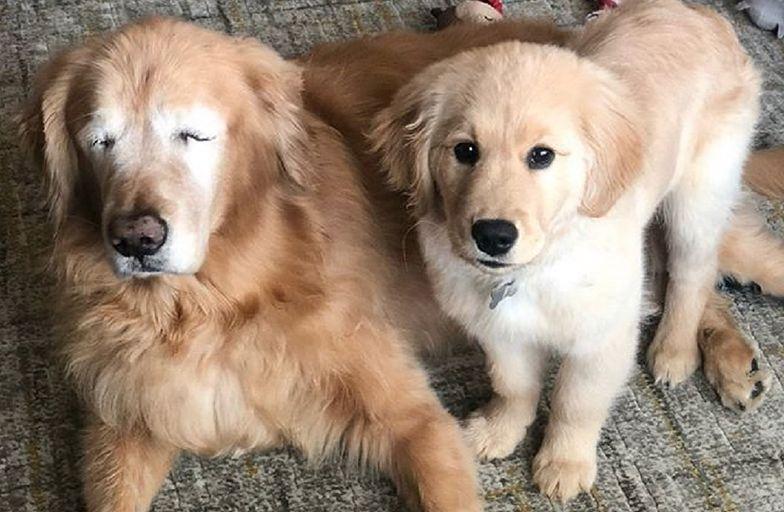 Niewidomy pies zyskał psa przewodnika. Są nierozłączni