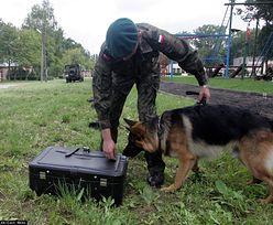 WOT dostaną do służby psy. Mariusz Błaszczak wydał decyzję