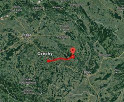 Puma grasuje w czeskich lasach. Zbliża się do Polski