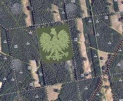 Gigantyczny orzeł z drzew na 100-lecie niepodległości. Wielki plan leśniczych i harcerzy