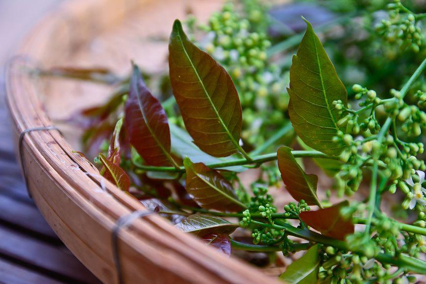 Olejek z miodli indyjskiej