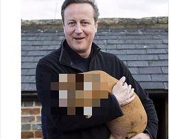 Mamy zdjęcia sławnej świnki Camerona! Pomogli internauci