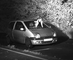Niemcy. Gołąb na zdjęciu z fotoradaru. Uchronił kierowcę przed mandatem