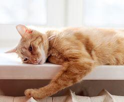 Koty nas ignorują. Potwierdzają to najnowsze badania